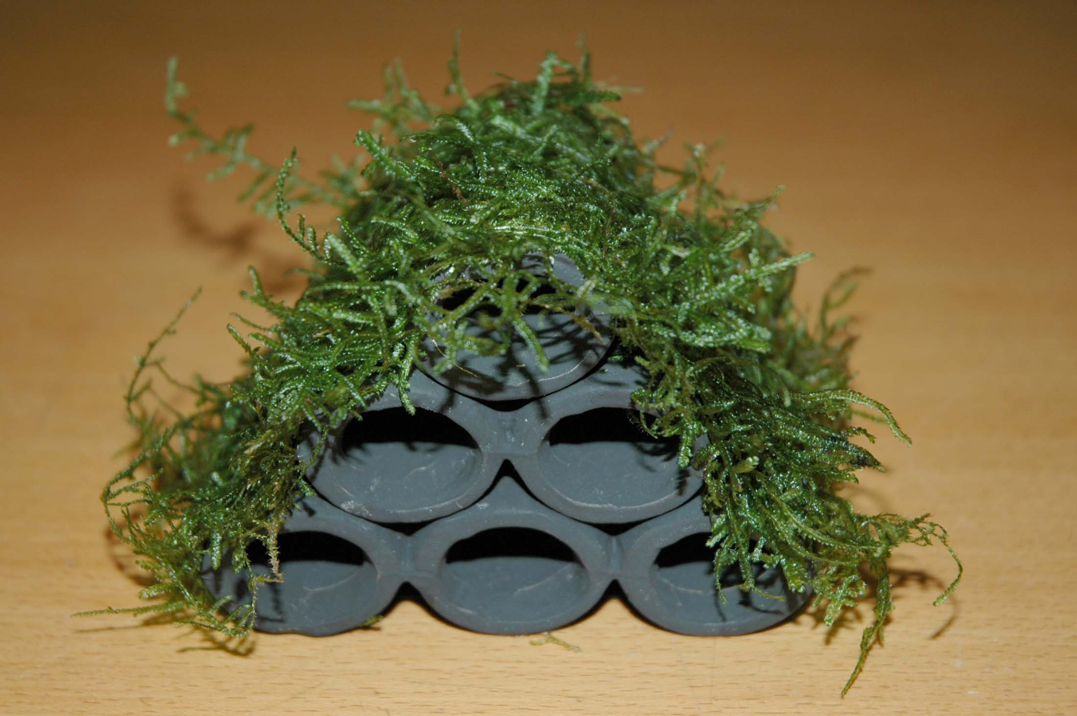 SF Garnalen pyramide met Christmas mos   Welkom bij aquarium planten com   nano inrichting