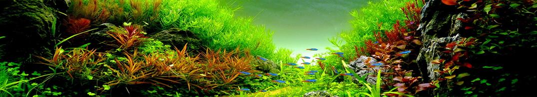 Welkom Bij Aquarium Planten Com